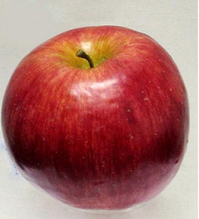 Декоративное яблоко