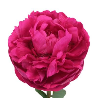 """Искусств цветок """"Пион"""" малиновый"""