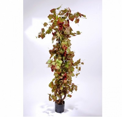 Виноградн лоза с красн виноград 160см